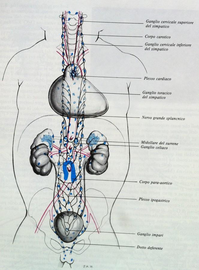 Cellule APUD nell 39 uomo 35 Sistema